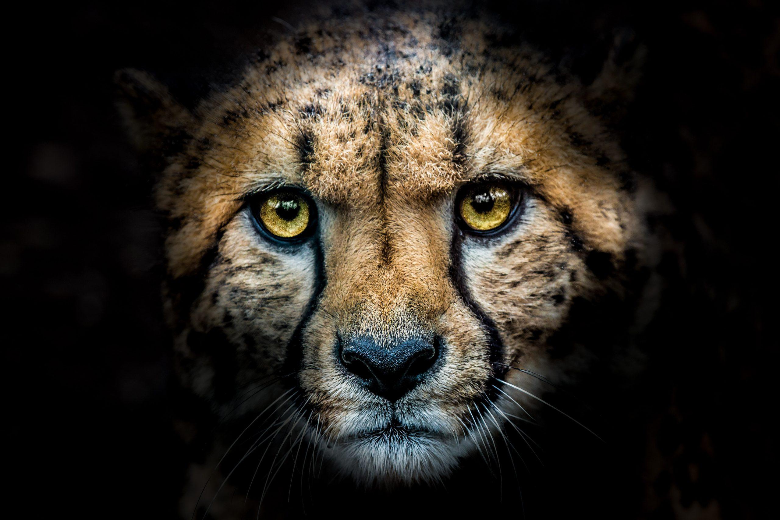 cheeta burgers zoo fotografie